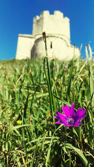 Flower Beauty In Nature Nature Wildflower Outdoors Sky Rennyphotos Croatia Full Of Life Croatia_photography Croatia Cro Croatiafulloflife Croatia ❤ Spring 2016 Springtime Nature Rural Scene No People Grass Plant Castle Fort Fortress Macro Purple Flower