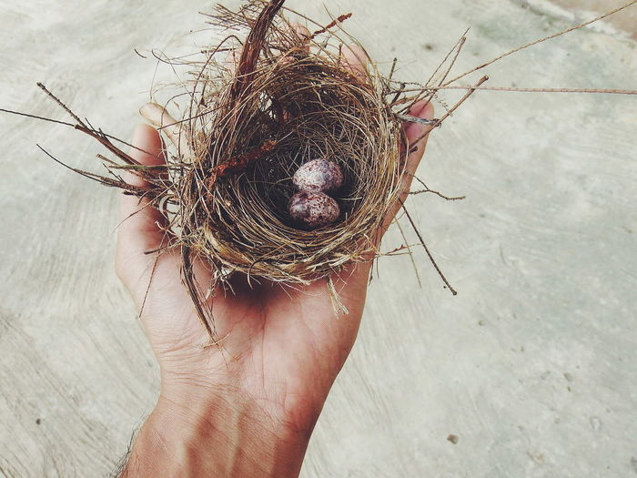 Close-Up Of Hand Holding Nest