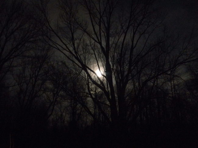 Backgrounds Bare Tree Beauty In Nature Branch Bright Night Day Full Moon Haunted Haunted Woods Moon Moon Light Nature Night Sky Nighttime No People Outdoors Scenics Silhouette Sky Supermoon Tranquility Tree