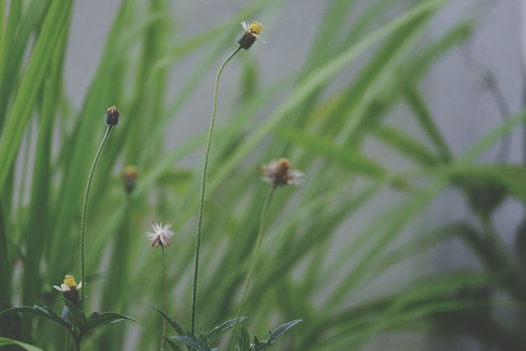 Plant Nature Growth Grass Insect Beauty In Nature No People Green Color Outdoors Close-up Day Grass Dandelion Seed Lovelygrass Seed Green Color Beauty In Nature