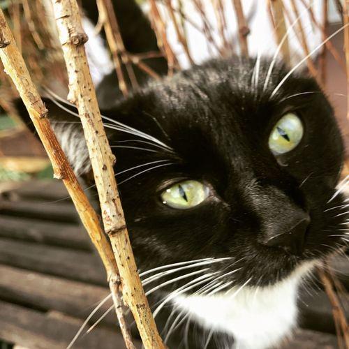 Kitten Cats