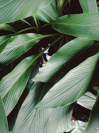 Blackandwhite Green Green Green!  Plant Life Unicolor Leaves_collection EyeEm Eyeem Philippines Happiness Inlife Eyeemgood