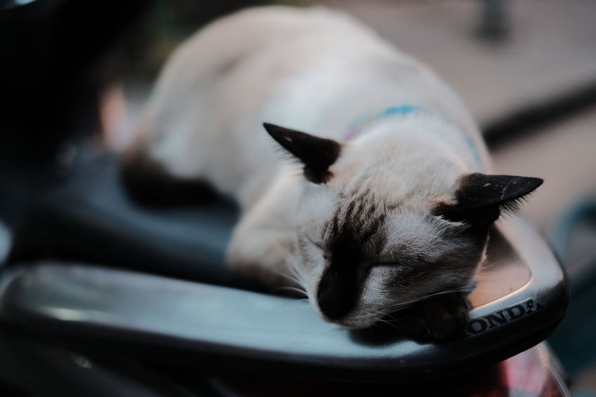 Meaw meaw Pets Domestic Animals One Animal Mammal Animal Themes Animal Head  Animal Domestic Cat Nose Close-up No People Sleeping Cute Lying Down Day Cat Cat On Bike Cat Photography Beauty Nature Portrait Kitten