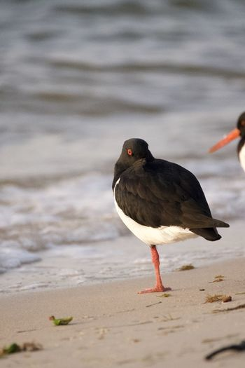 Bird perching on a beach
