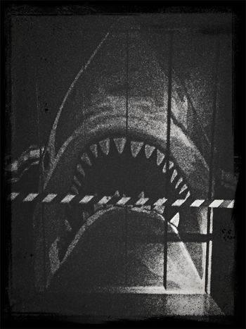 Out Of Order Shark Abstract Black & White