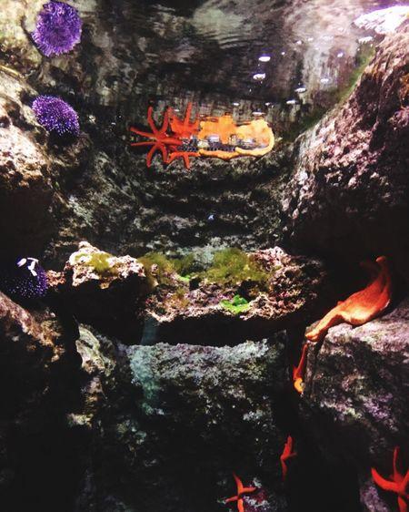 Nature Water Animal Themes étoile De Mer