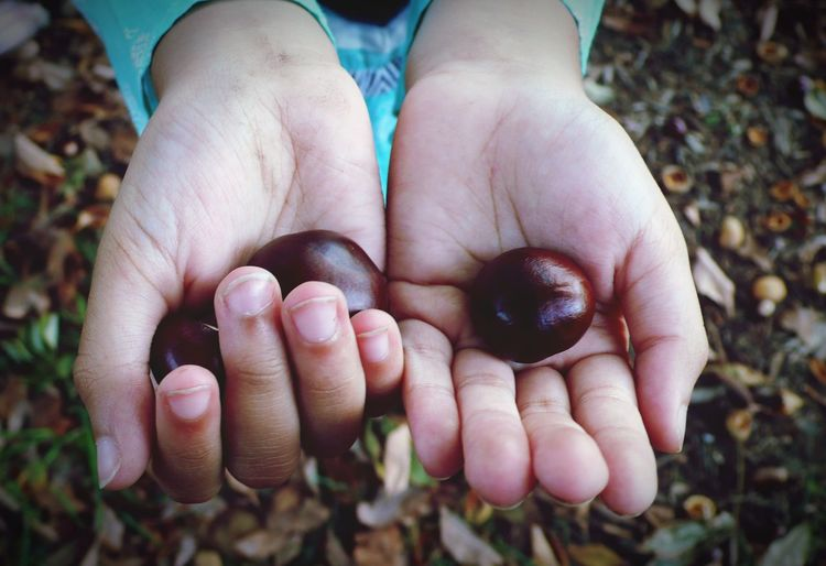 Close-up of child hands holding seeds on land