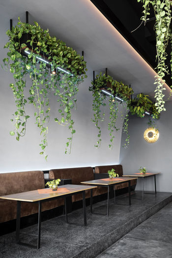 Potted plants on table against wall of house