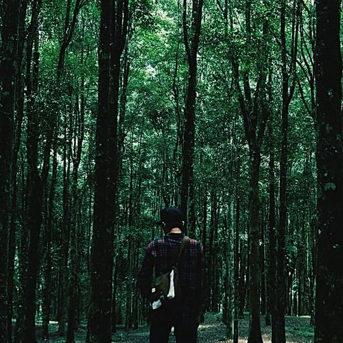 Tree Forest Tree Trunk Nature Real People Men Growth Rear View Standing One Person LifestylesHiking Day Leisure Activity Outdoors Only Men Young Adult Adults Only