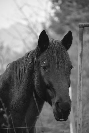 Animal Domestic Animals Horse One Animal Animal Body Part Animal Head  Nature Outdoors No People Snout Pets