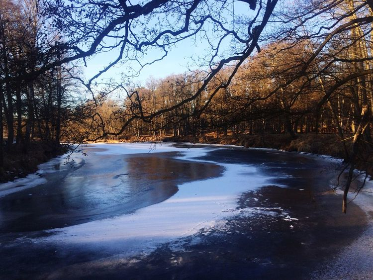 Nature Cold Temperature Tree Winter Snow Beauty In Nature Water Scenics No People Tranquility Frozen Bare Tree Ice Outdoors Tranquil Scene Branch Sky Landscape Landscape_Collection EyeEm Best Shots EyeEm Nature Lover Eyeemphotography Laphotographiebleue Scandinavianphoto