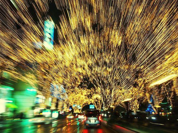 Best Christmas Lights 光のページェント