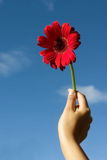 Close-Up Of Hand Holding Red Flower Against Sky