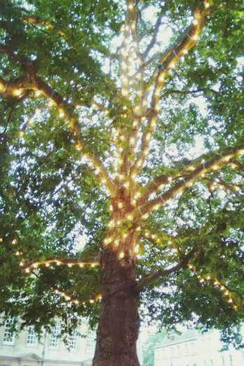 Electronic Music Shots Tea Lights Trees Nightlife