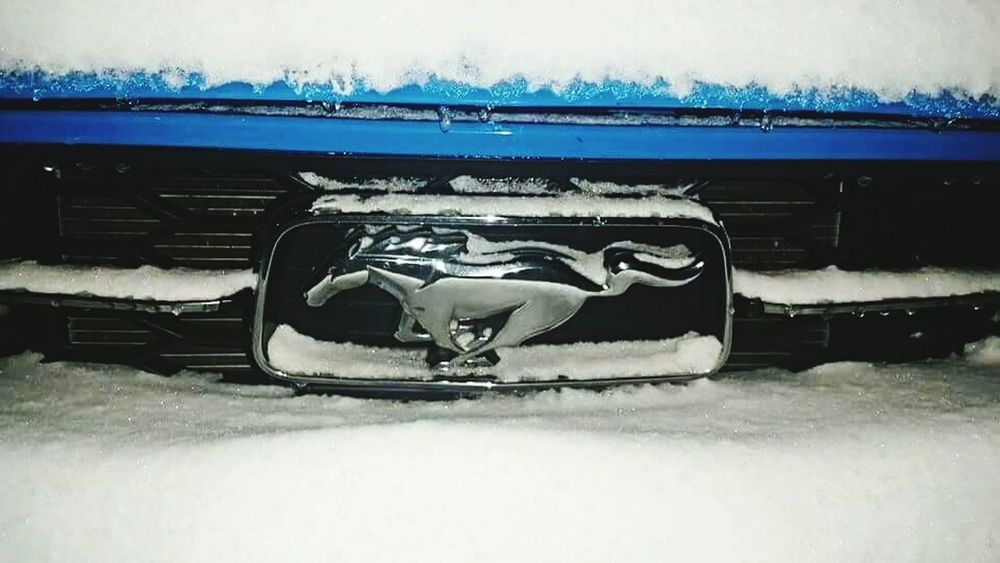 AmericanMuscle Fastlife Sexycar Check This Out My Best Photo 2015 Muscle Cars Snow Snowfall Enjoying Life Ford Mustang Fordmustang BadassCar Grabberblue