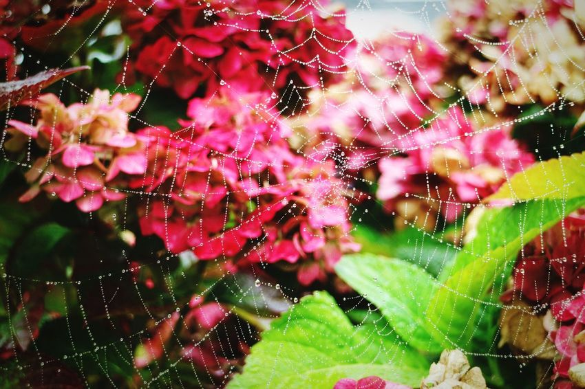 Spiderweb Fall Winter With A Little Bit  Of Summer First Eyeem Photo First Eyem Photo FirstEyeEmPic First Thing I See Gorgeous Beautiful