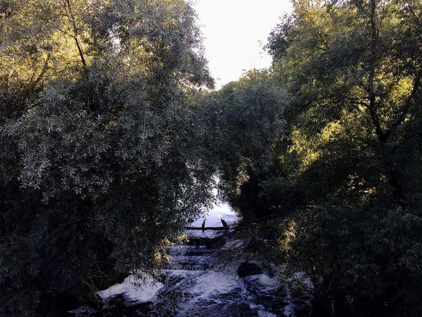 Tree Nature River Beauty In Nature Sestra Day September17 Water