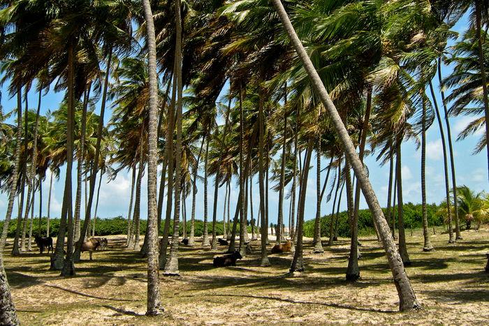 Coqueiros Beach Brasil Brazil Coqueiros Day Landscape Natal - RN Nature Sol Tropical Climate