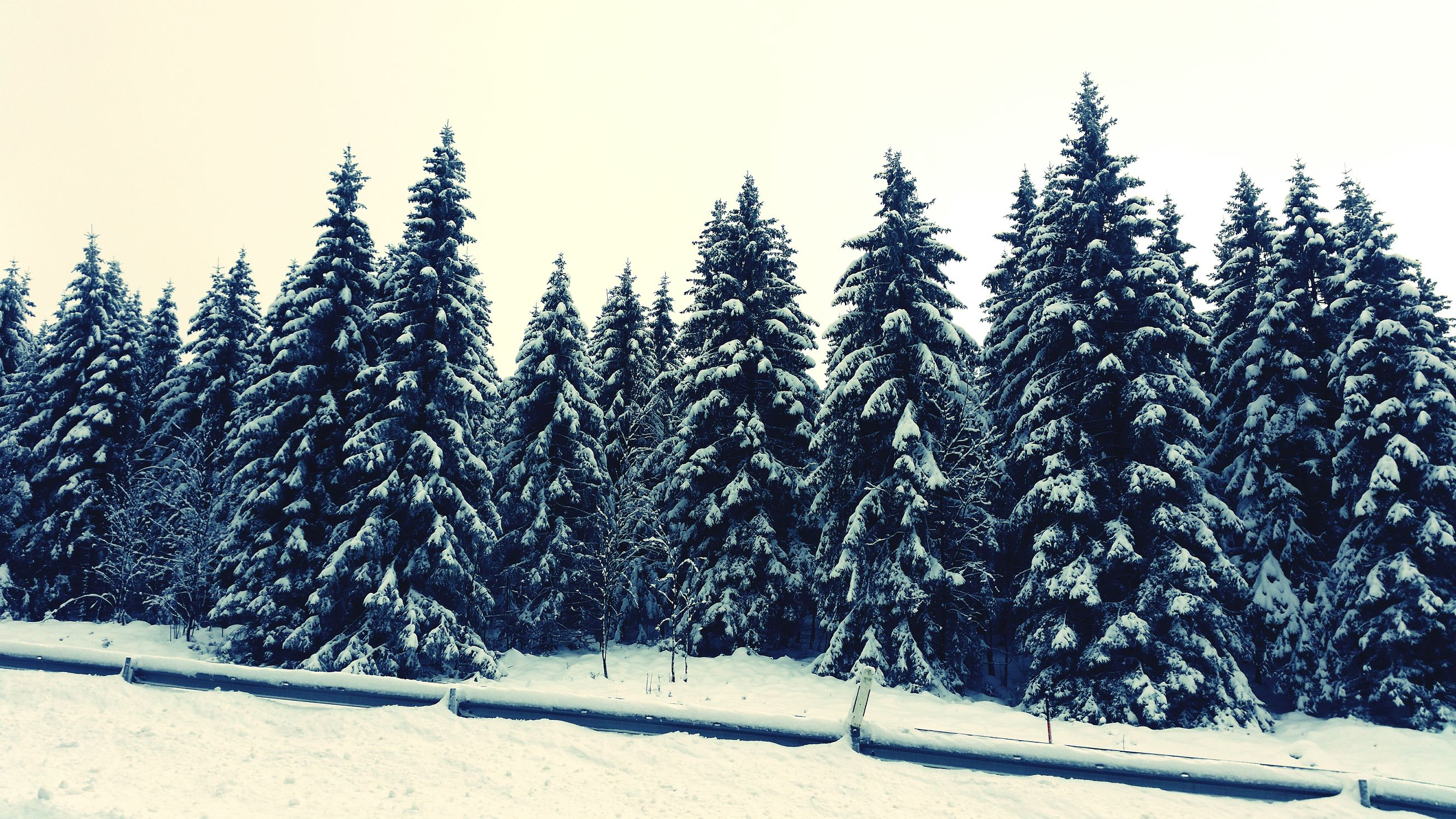 snow, winter, cold temperature, season, weather, covering, frozen, landscape, nature, tranquility, tranquil scene, white color, field, clear sky, beauty in nature, snow covered, tree, covered, scenics, sky