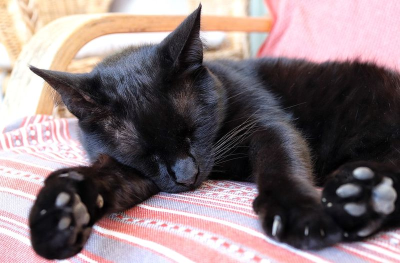 Animal Sleeping Animal Themes Black Cat Black Cat Collection Black Cat Paws Black Cat Photography Black Cats Black Cats Are Beautiful Black Color Close-up Domestic Animals Domestic Cat Domestic Cats Feline Mammal One Animal Paws Paws Of A Cat Pets Relaxation Sleeping Cat Sleeping Cat Relaxing Cat Sleeping Cats Sleeping Pet Sleeping Pet Cat
