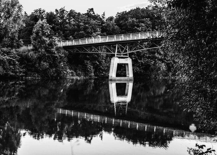Bridge Tree