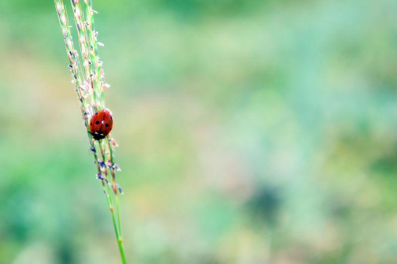 Close-up Fragility Insects  Ladybug Nature Outdoors Tranquility Wildlife
