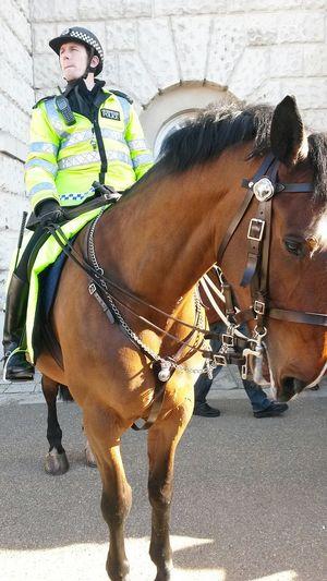 Londres London Cheval Horse Policier Beautiful ♡