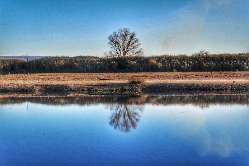 reflexos River Tagus River Calm Tree Water Lake Reflection Blue Sky EyeEmNewHere