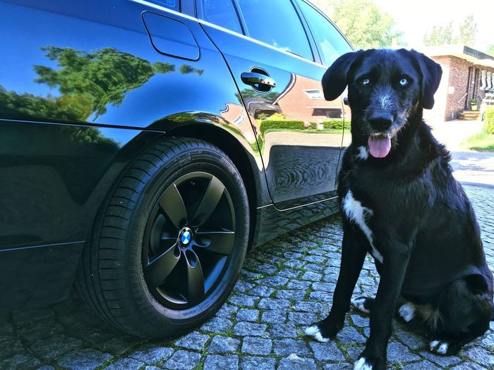 One Animal Dog Car Day Pets No People Outdoors Animal Themes Transportation Domestic Animals Mammal Sitting Tree Tire Sky Close-up Bmw E61