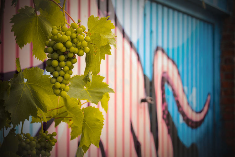 I am sure the grapes are sour in Doel Belgium Hanging Multi Colored Outdoors Day No People Close-up City Graffiti Garage Door Grapes Abended Urban Exploration Urban Multicolored Abendoned Verlassene Plätze