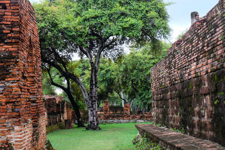 Alway i think Tree&Ruin Architecture is Beautiful Day Outdoors Green Color Tree Built Structure Architecture Growth Building Exterior No People Grass Nature Sky Architecture_collection Brick Travel Destinations Ayutthaya Historic Park Religion Templephotography Architecture Travel Tree History Tourism Ayutthaya Thailand Trees