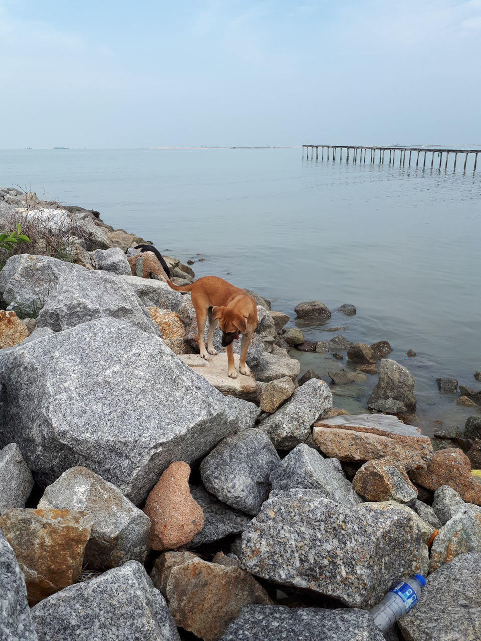 sea, water, rock - object, animal themes, nature, horizon over water, mammal, one animal, domestic animals, dog, day, sky, outdoors, beauty in nature, no people, pets, tranquility, standing, scenics