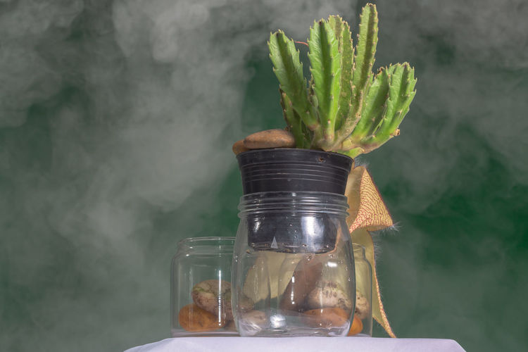 Close-up of potted plant in jar
