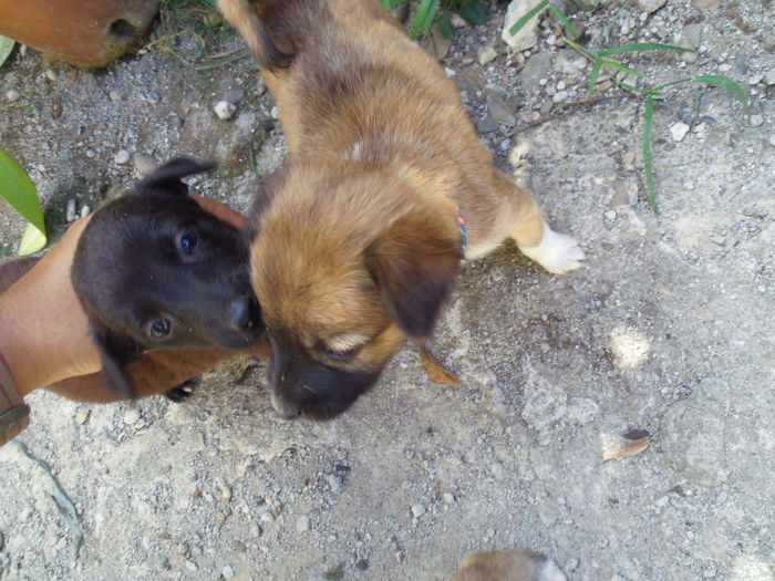 High angle view of two dogs