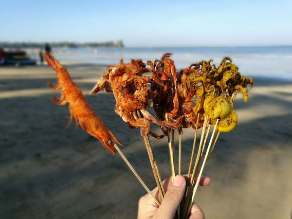 Chaung thar beach, Myanmar..😍 Focus On Foreground Sea Nature Plant Outdoors Sunlight Beach Day Human Hand Human Body Part Beauty In Nature Close-up Octopus Sea Horse One Person Cactus Sea Life People