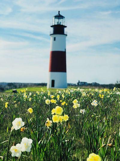 Sankaty Lighthouse Lighthouse