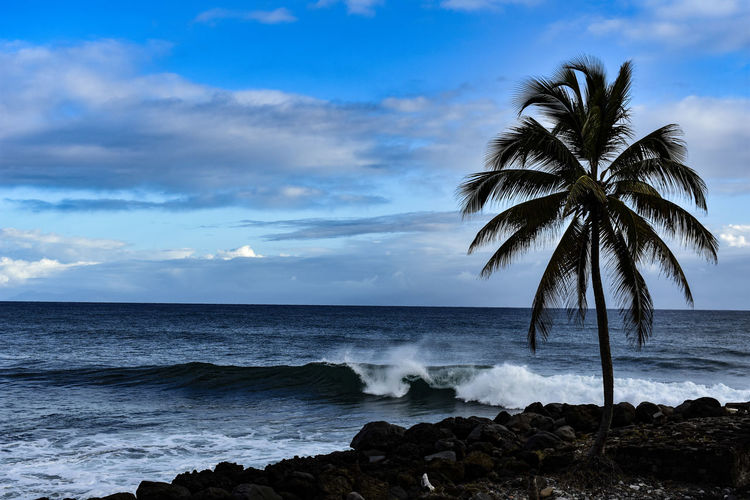 rivage Tree Palm Tree Sea Water Beach Wave Sunset Sky Horizon Over Water