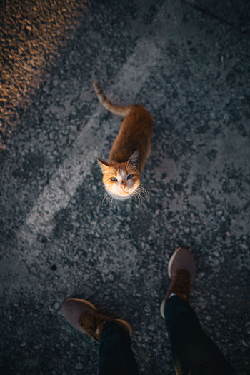 High angle view of person standing by cat standing on road