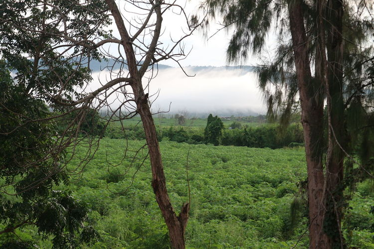 Seafog Beauty In Nature Branch Day Forest Green Color Growth Landscape Mist Mountain Nature No People Outdoors Scenics Sky Tranquil Scene Tranquility Tree Water