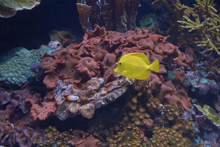 Small yellow fish in the ocean,lonely, shiny, rocks, algae