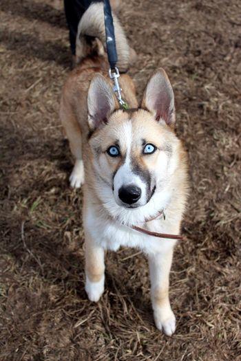 Close-up portrait of dog on ground
