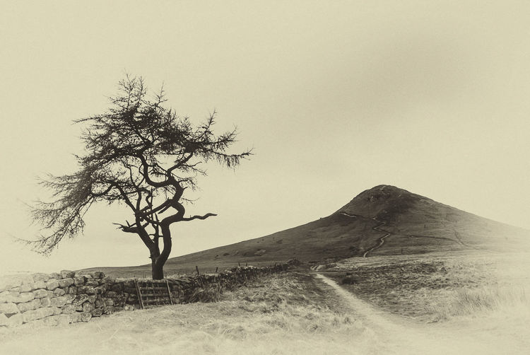 Old Photo Roseberry Topping Yorkshire Landscape Lone Mountain Nature Remote Scenics Sepiatone Tranquil Scene Tranquility Tree