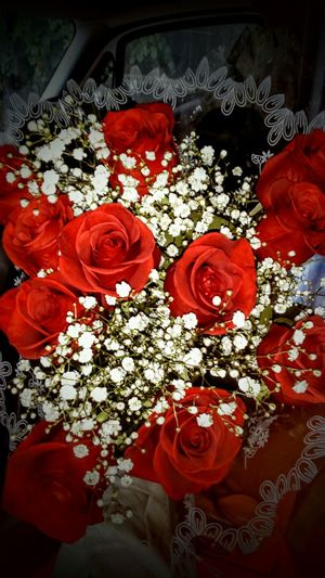 Morning start with deeeeep Red Roses🌹