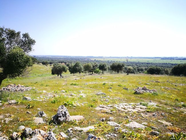 Outdoors Nature Day No People Beauty In Nature Tranquility Tree Sky Scenics Horizon Over Water Clear Sky Blue Salento Puglia Lecce My Country Clear Sky Green Green Color Plant Leaf Tree Tranquility Sunlight