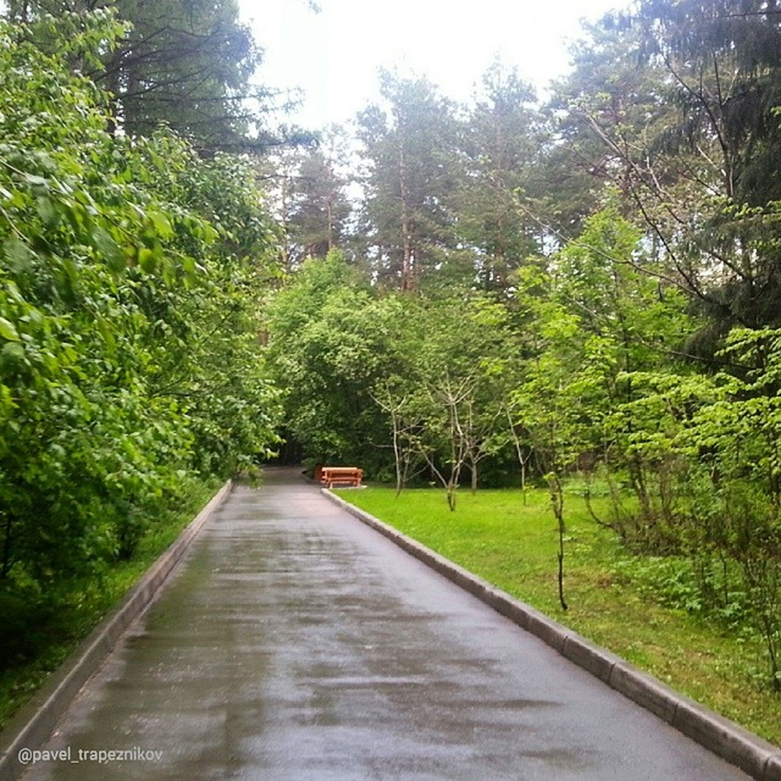 tree, the way forward, green color, growth, tranquility, grass, nature, tranquil scene, lush foliage, diminishing perspective, beauty in nature, sunlight, vanishing point, green, plant, road, transportation, scenics, footpath, empty
