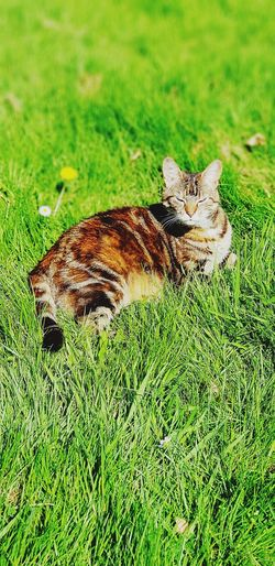 sunshine is mine! Cats Of EyeEm Sunbathing Cat Brown Tabby Feline Photography Grasses And Sun Catlovers Buffy Senior Pets Grass Close-up Green Color