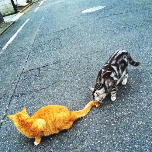この後怒られていた。 友達 Cat Cats 通勤 大きくなった おはよう
