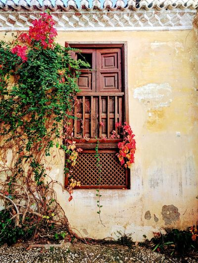 Door Day No People Outdoors Architecture Built Structure Flower Old Buildings Puerta Flores Y Más Flores Hojas De Otoño Autumn Colors Fenêtre Fleurs Building Exterior Ventanas Del Mundo Windows And Doors Beatiful Colors Outdoor Pictures Invierno 2017 Leaf Hojas Y Ramas Around The World Closed Window  Beauty In Nature