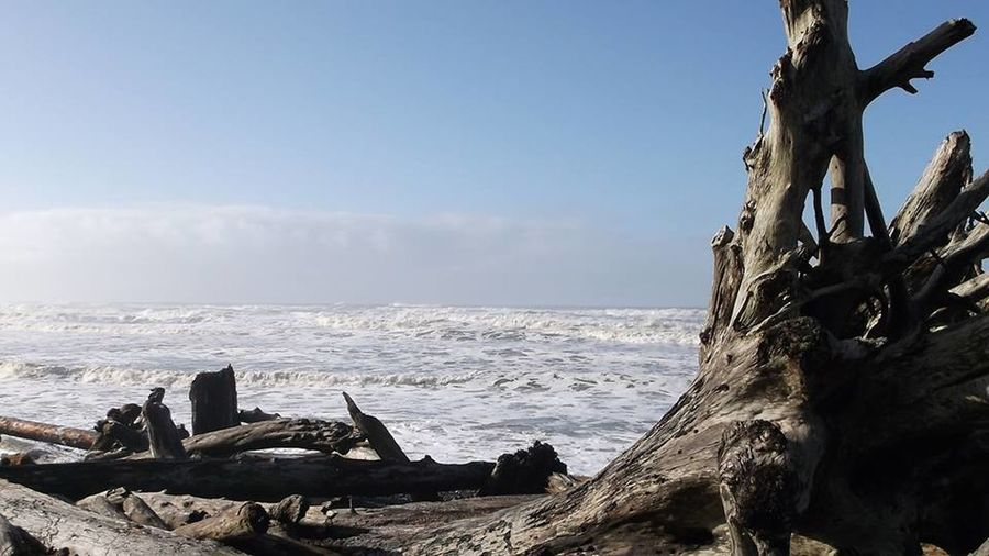 Beach Beauty In Nature Blue Cloud - Sky Coastline Damaged Driftwood Horizon Over Water Nature Non-urban Scene Obsolete Outdoors Remote Scenics Sea Shore Sky Stone Material Tranquil Scene Tranquility Tree Trunk Water Wave Weathered