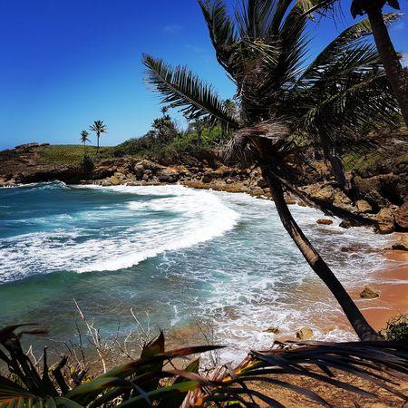 Sea Beach Palm Tree Branch Sky Ocean Calm Tranquil Scene Coconut Palm Tree